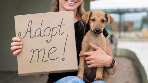 Dog Adoption, How to Be Charitable as a Coffee Shop this Holiday Season