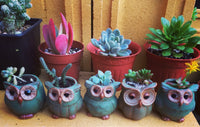 Lovely Owls Set - Sweet and Succulent