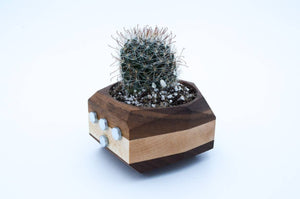 Magnetic Geometric Planter - Sweet and Succulent