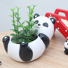 Panda Pot - Sweet and Succulent