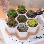 Set of 7 Hexagonal Ceramic Pots with Wooden Base - Sweet and Succulent