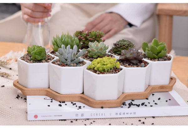 Set of 9 Hexagonal Ceramic Pots with Wooden Base - Sweet and Succulent