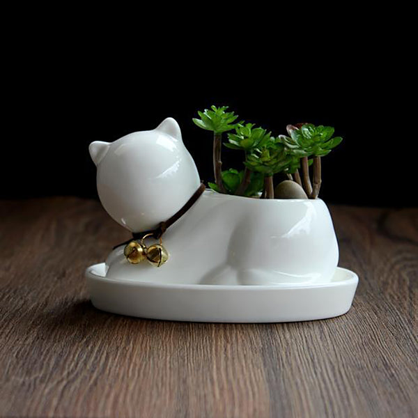 Cute Cat with Bell - Sweet and Succulent