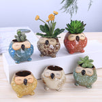 Colorful Owls - Sweet and Succulent