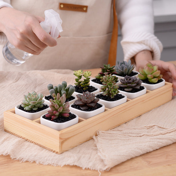 Ten Ceramic Pots With Wooden Base - Sweet and Succulent