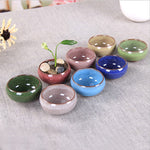 Beautiful Glossy Pot Set - Sweet and Succulent