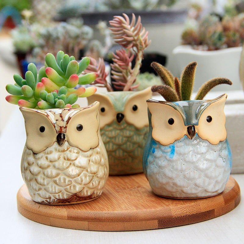 Little Owls - Sweet and Succulent