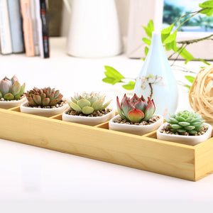 Five Pots with Wooden Display Case - Sweet and Succulent