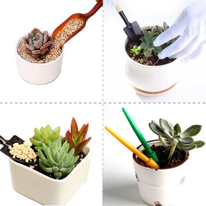Ultimate Succulent Care Kit - Sweet and Succulent
