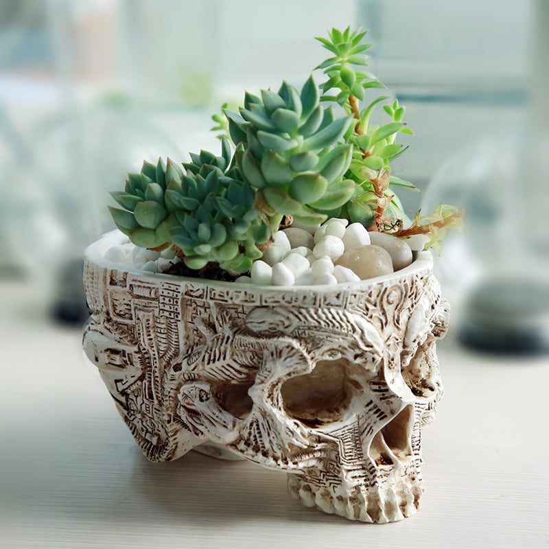 Hand Carved Skull Pot - Sweet and Succulent