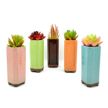 Tall Ceramic Pots - Sweet and Succulent
