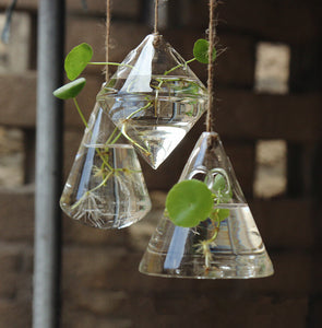 Glass Hanging Terrariums