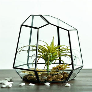 Glass Succulents Terrarium
