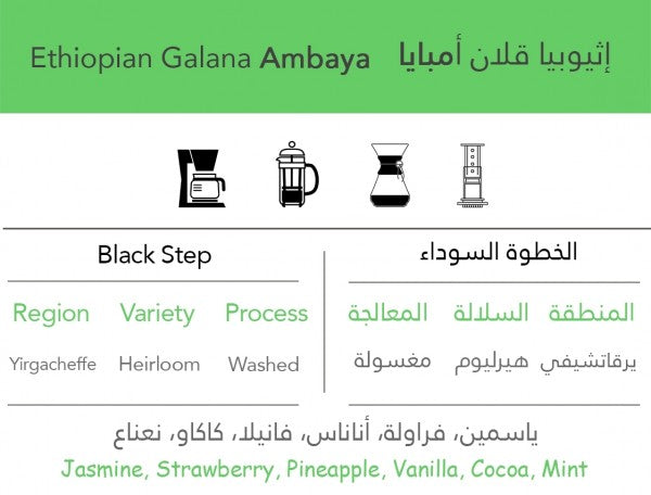 Ethiopian Ambaya - إثيوبيا قلان أمبايا - EQUAL Coffee Hub
