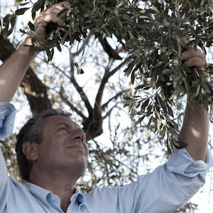 Meet Philippe, Our Olive Oil Connoisseur