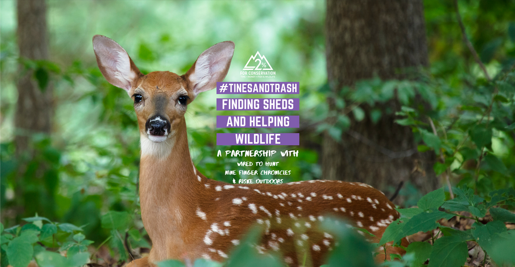 #TinesAndTrash - A great way to help wildlife!