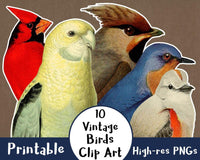 10 Vintage Birds Clipart - The Digital Download Shop