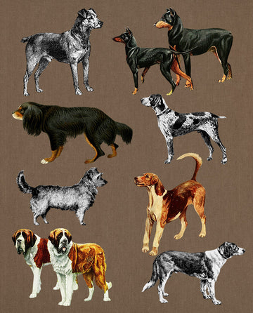 8 Vintage Dogs Clipart