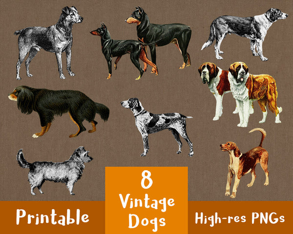 8 Vintage Dogs Clipart - The Digital Download Shop