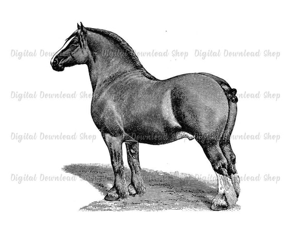 Clydesdale Horse Vintage Image - The Digital Download Shop