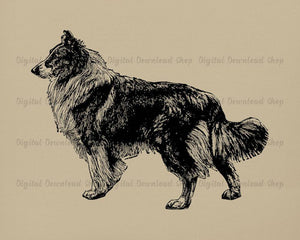 Collie Dog Vintage Image - The Digital Download Shop