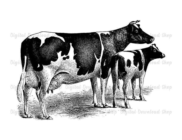 Cow and Calf Vintage Printable Image - The Digital Download Shop