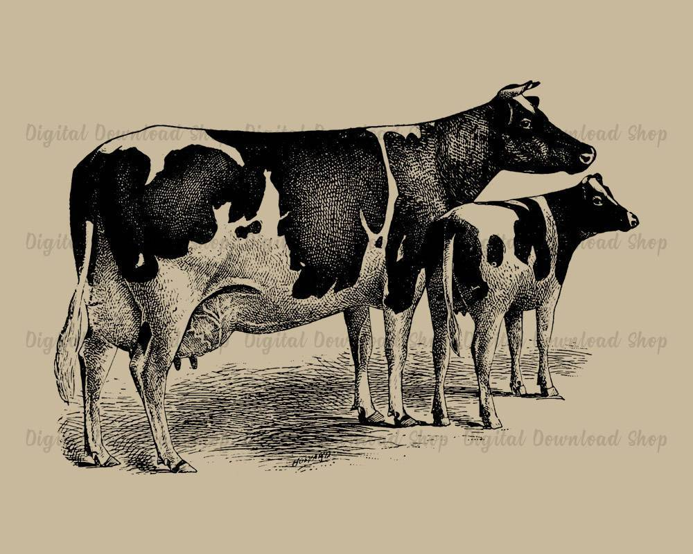 photograph about Vintage Printable identified as Cow and Calf Basic Printable Picture