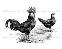 Rooster, Hen, + Lake Vintage Image - The Digital Download Shop