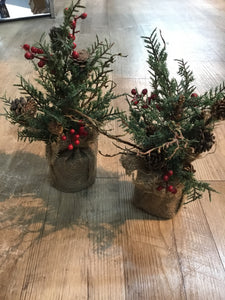 Pine Tree in Burlap Round Base