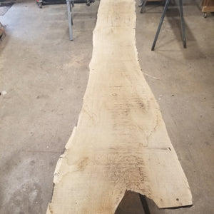 White Oak  Live Edge Slab