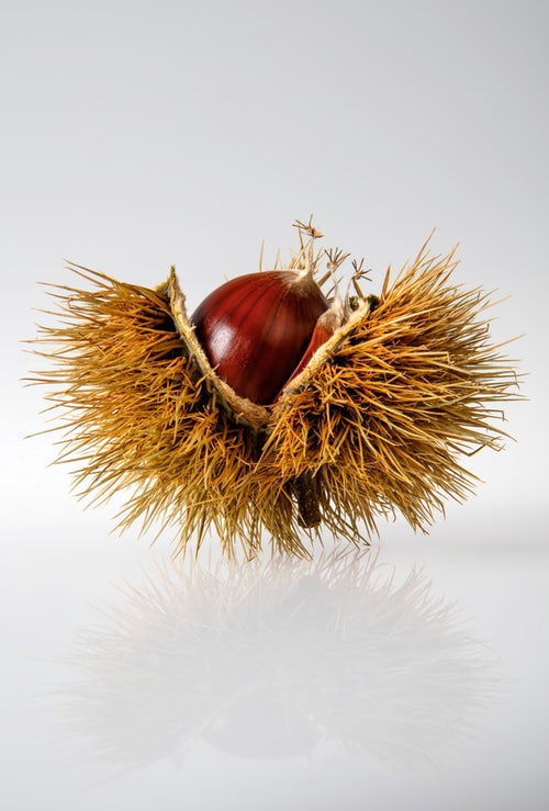 Horse Chestnut benefits for cellulite