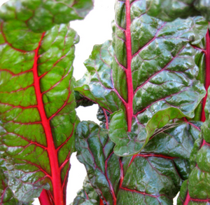 Lylah's Kitchen - Swiss Chard For Dinner
