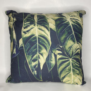 Alocasia Cushion - natopia