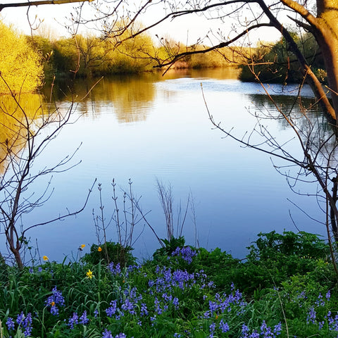 view of river and bluebells