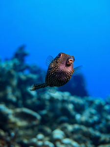 A Beginners Guide to Underwater Photography - Online Course