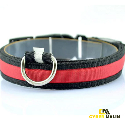 collier lumineux chien rouge