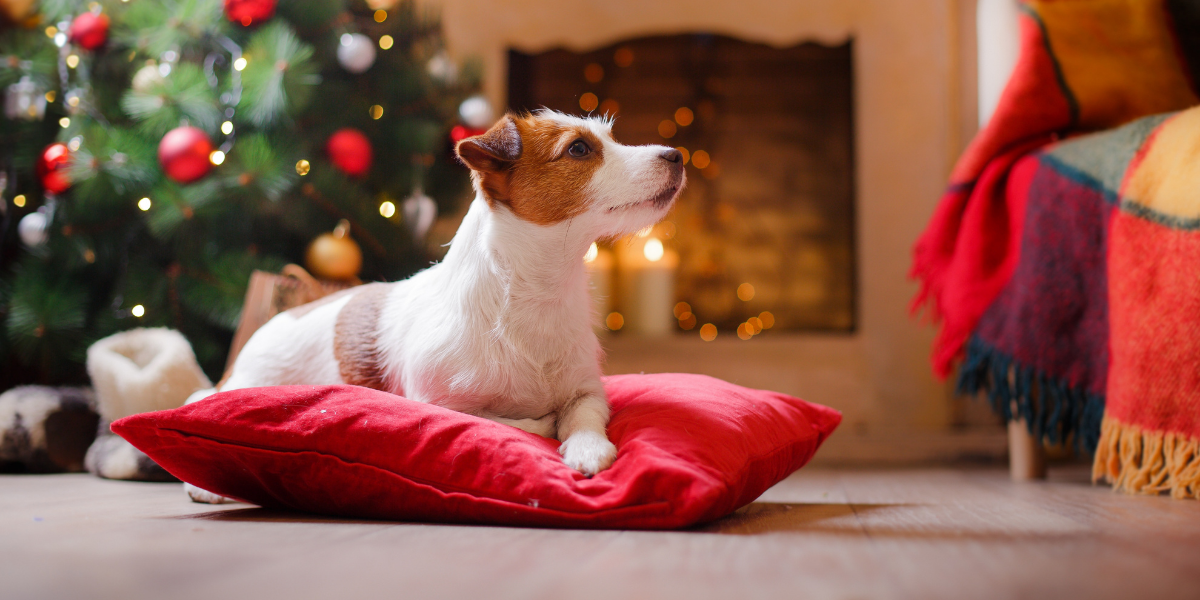 Pet Dangers During the Holiday Season