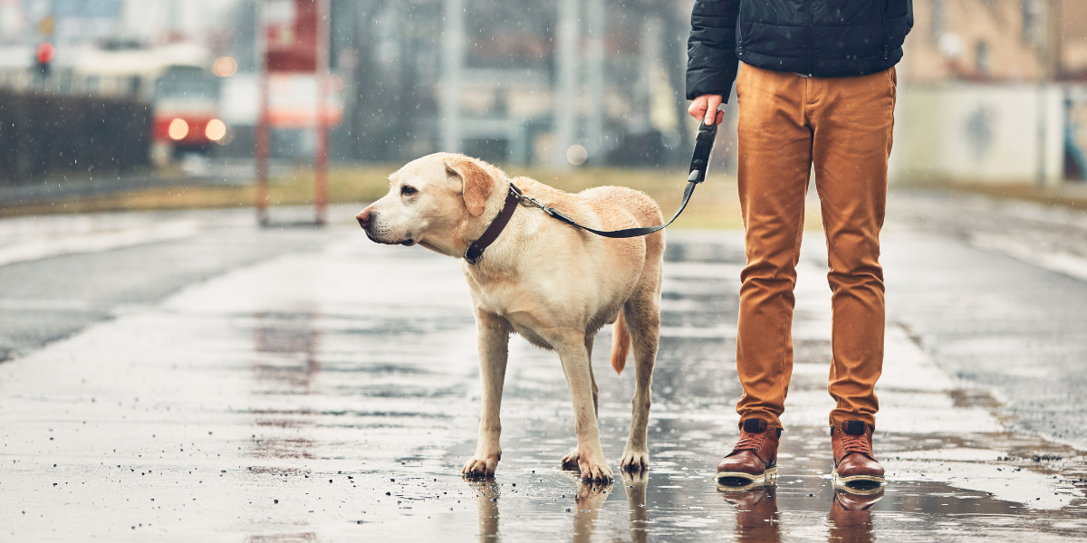 Pet Care During a Weather Emergency