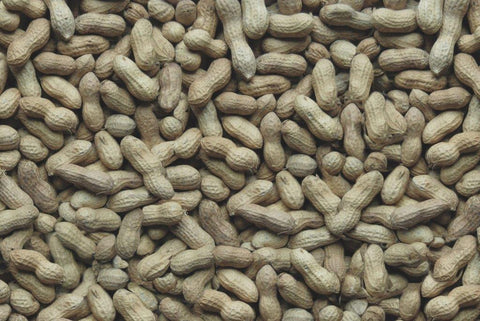 Song of America Whole Fancy In-Shell Peanuts