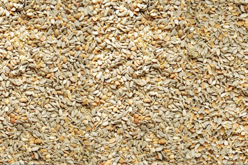 Song of America Patio Low Millet Seed