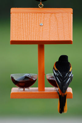 Recycled Orange Jelly Feeder