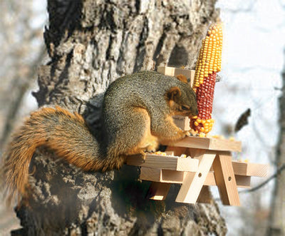 Picnic Table Ear Corn Squirrel Feeder