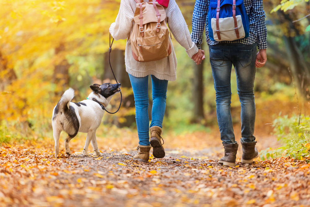 4 Reasons You Need to Go for a Walk