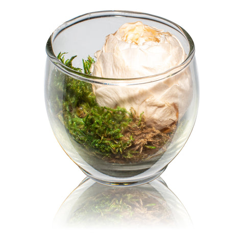 Zen Collection - Moss Garden Votive - Glass/x 1/Peach
