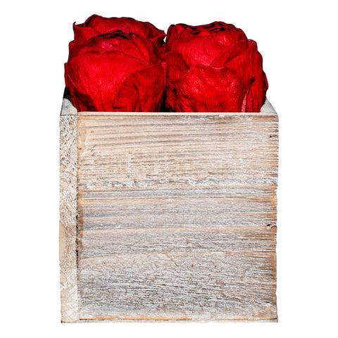 Four Season Peonies™ - Red Peonies Harvest Bloom - White/x 1/Red