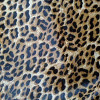 Snow Leopard on Beige