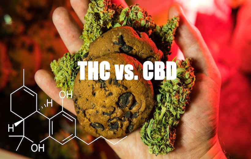 CBD VS. THC: Everything You Need to Know