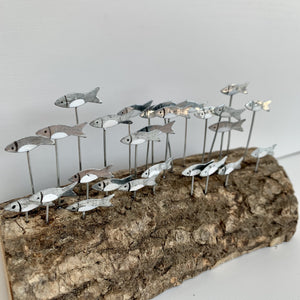Silver Anchovies on Wood