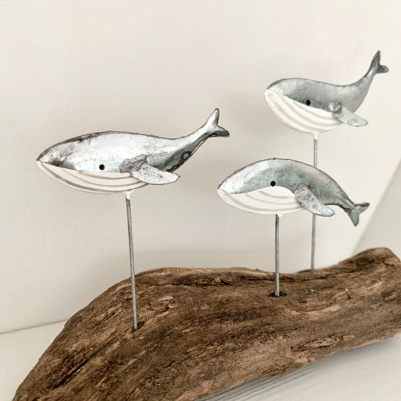 Leaping Silver Whales