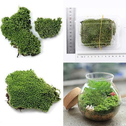 Home Party Decoration Artificial Green Grass Moss Plant Ornament Miniature Artificial Plants